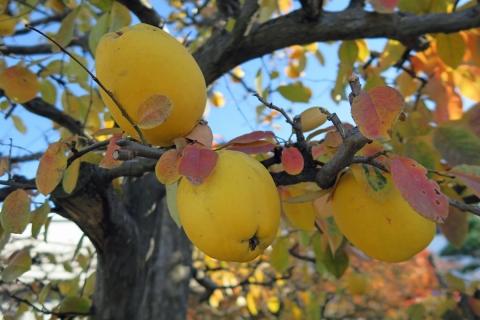 04黄色いフルーツ