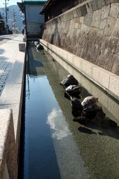 43a広重美術館入り口の亀