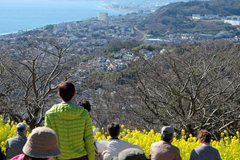 15吾妻山公園小田原方面