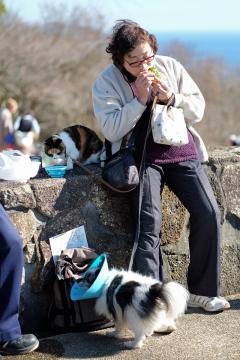 18吾妻山公園イヌネコおばさん