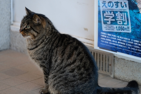 08乗り場のネコ