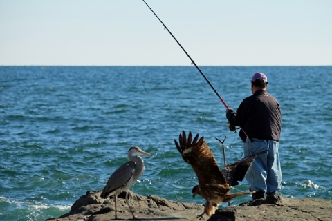 17釣り人と鳥たち
