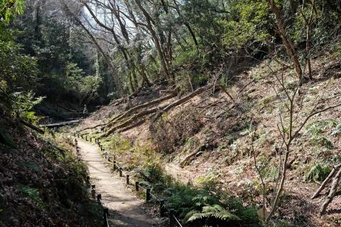 03小網代の森
