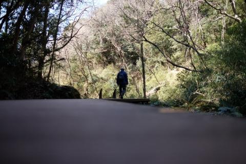 08小網代の森
