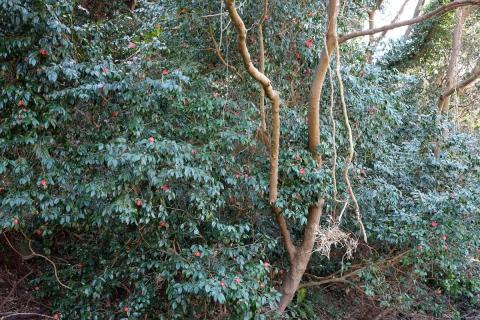 16小網代の森