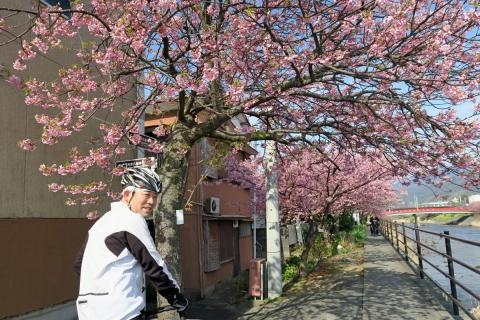 10河津桜
