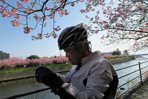 11河津桜