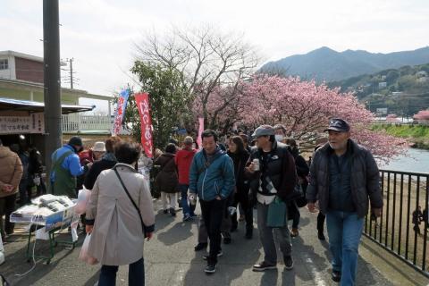 12河津桜