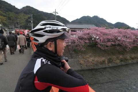 16b河津桜
