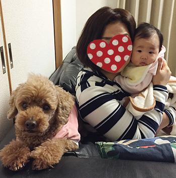 トイプーと赤ちゃん