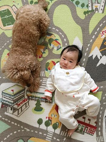 トイプー&赤ちゃん