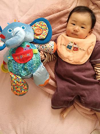 赤ちゃんとトイプー