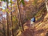 樹林帯の中の登山道