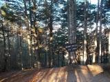 杖立峠の道標