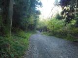 日影沢林道へ