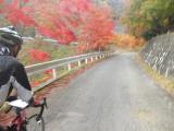 沿道の鮮やかな紅葉