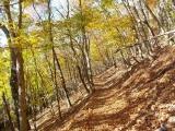 走りやすい登山道