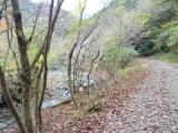 四十八瀬川沿いの西山林道