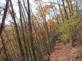 紅葉の登山道を走る