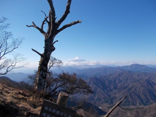 西丹沢から北丹沢へ:檜洞丸~犬越路