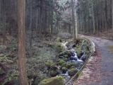 渓流沿いの林道を歩く