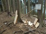 尾根上の伐採地