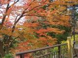 参道沿いの紅葉