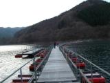 奥多摩湖上の浮き橋を渡る