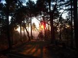 日の出直後に下山路へ