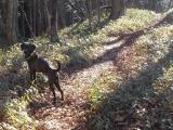 主人を捜す猟犬