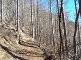 南面の伐採地