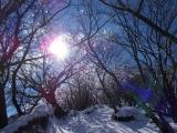 樹氷のシャンデリア