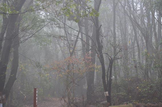 fog_20151224_DSC_0765.jpg