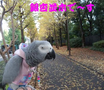 1_銀杏並木