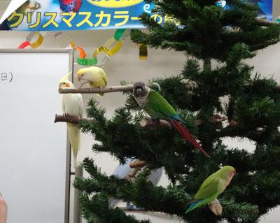 6_クリスマスカラー会
