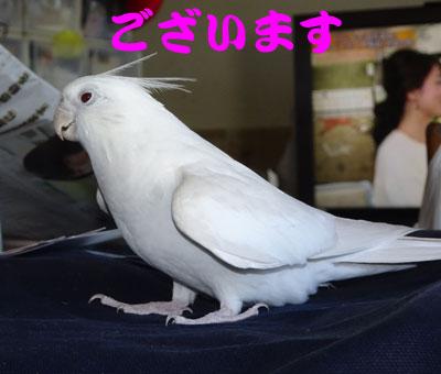 5_アンジュ
