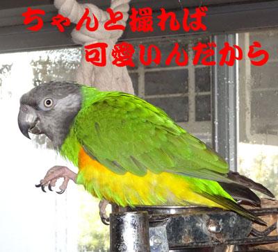 2_チャッピお祝い
