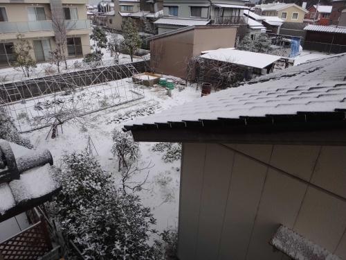 雪降ったの001