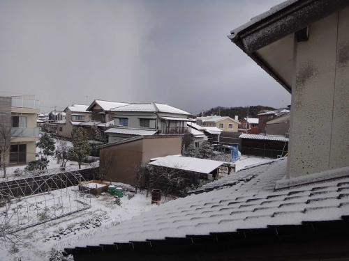 雪降ったの002