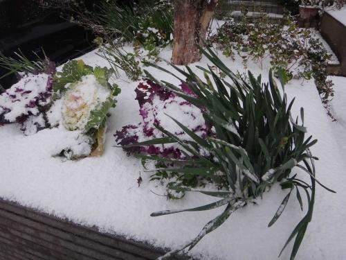 雪降ったの003