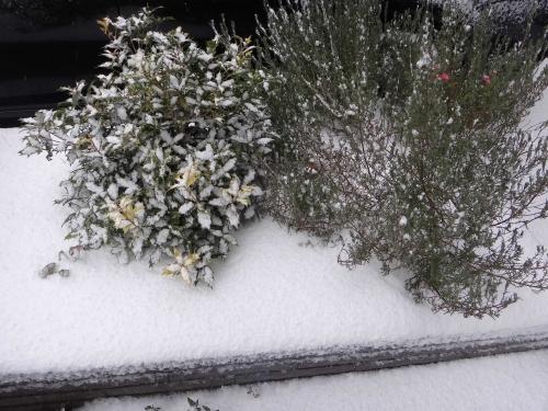 雪降ったの004