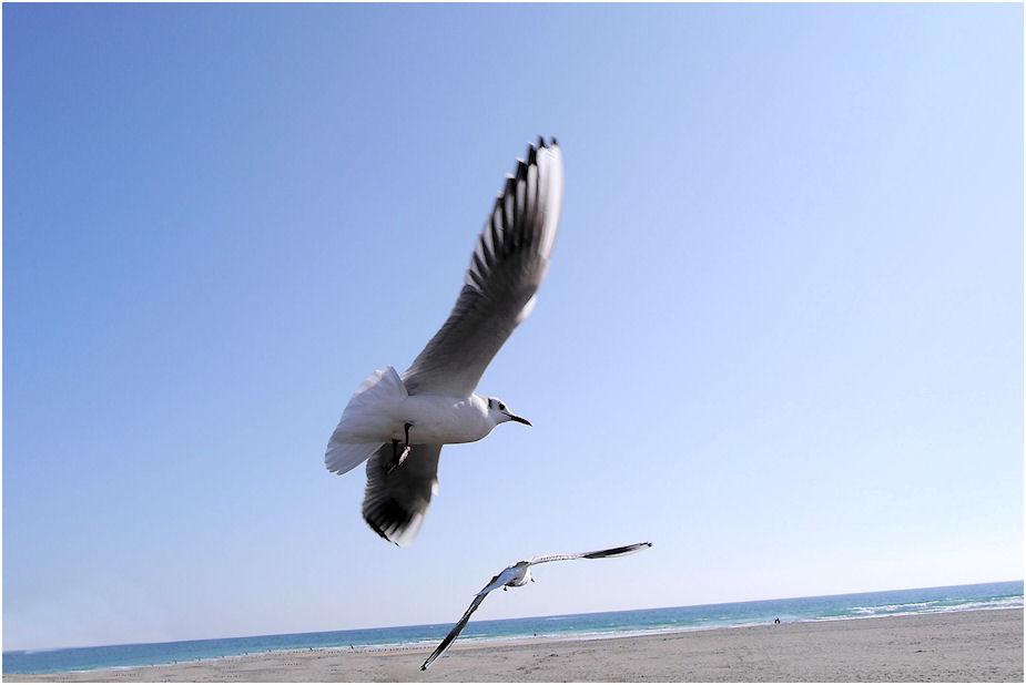 ゆりかもめ飛翔