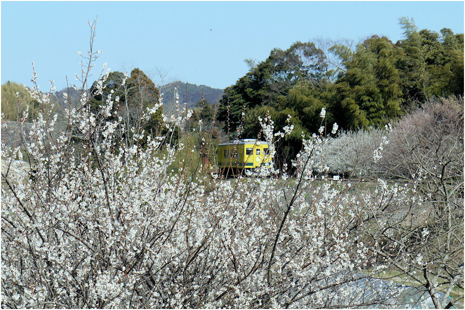 いすみ鉄道と梅