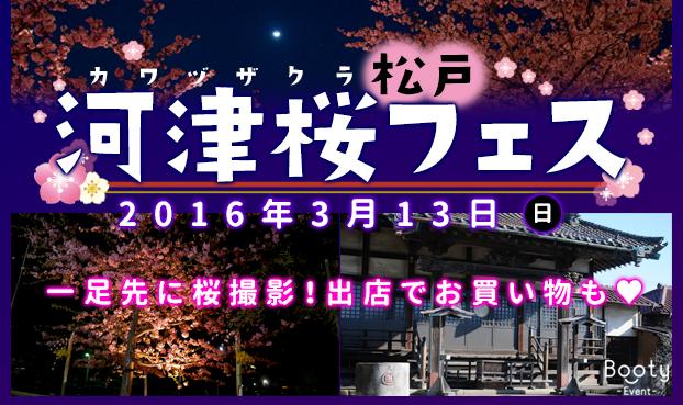 【622×369】松戸河津桜