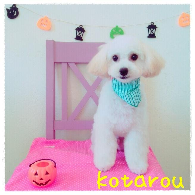kotarou 岡崎