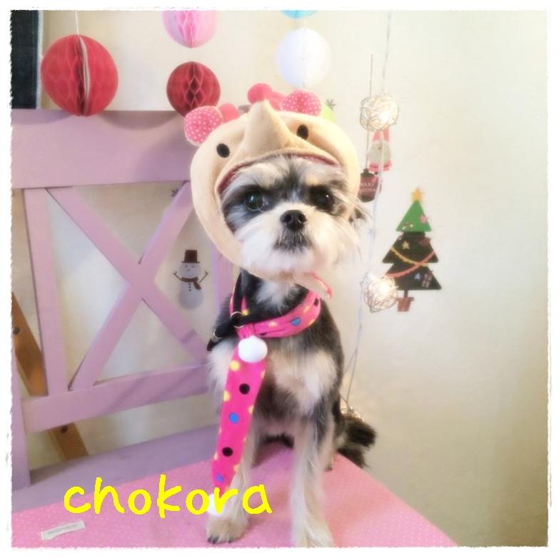 chocora 岡