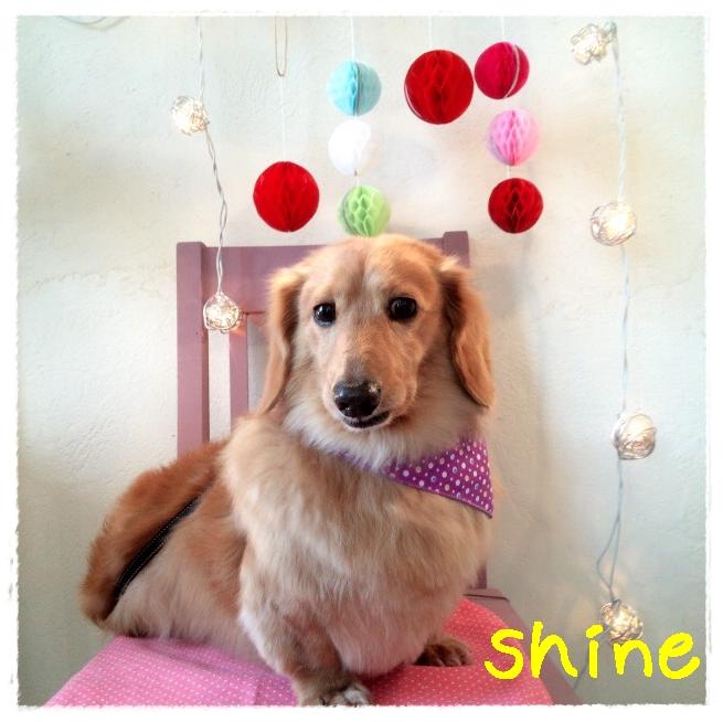 shine 高木