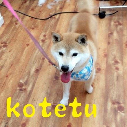kotetu 角南
