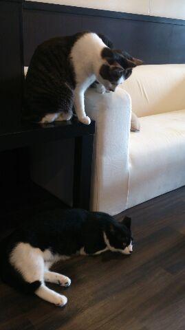 モアニとオラとさんちゃん