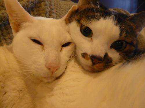 マナとモアニ